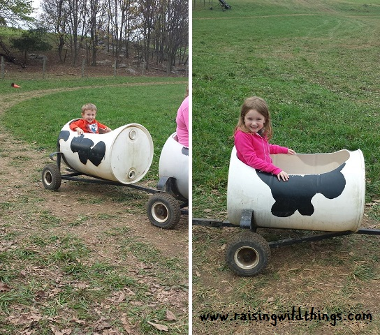 Cow ride